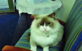 Aged Care Glengarry Cat Smudge