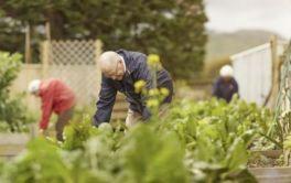 Retirement Village Choices